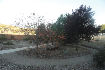 Library Garden in Fall